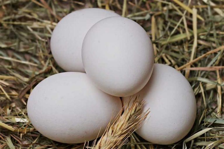 combien de protéine dans les blancs d'œuf
