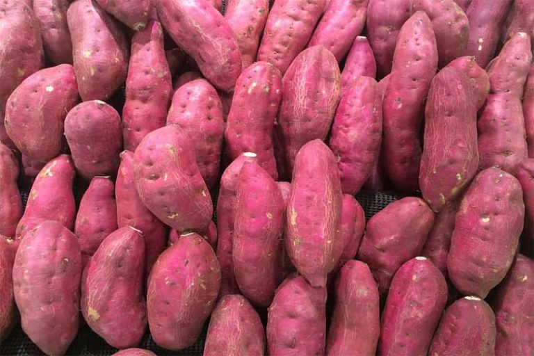 combien de protéine dans les patates douces