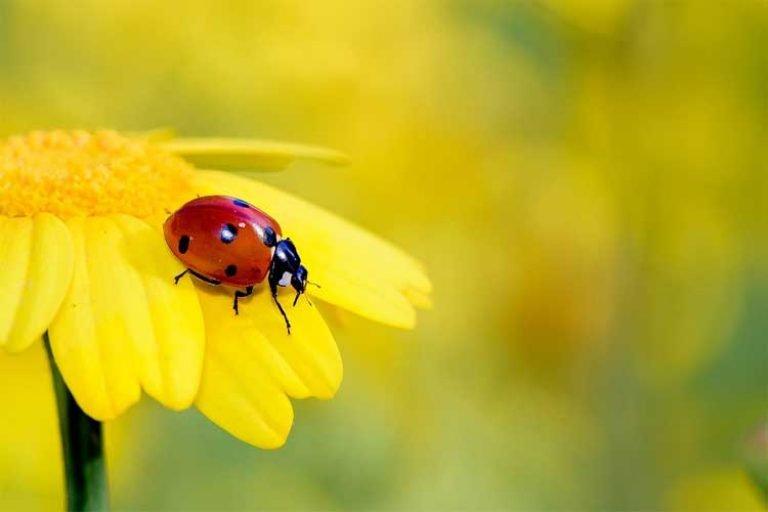 combien de protéine dans les insectes